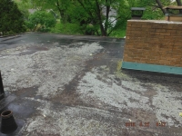 Moss Build Up On Flat Roof