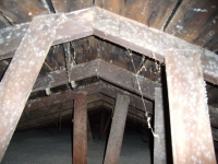 Mold Growth In Attic